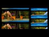 Шедевры ужаса / Частицы таланта (2014) лучшие фильмы Новинки, ужасы, триллер (16+)